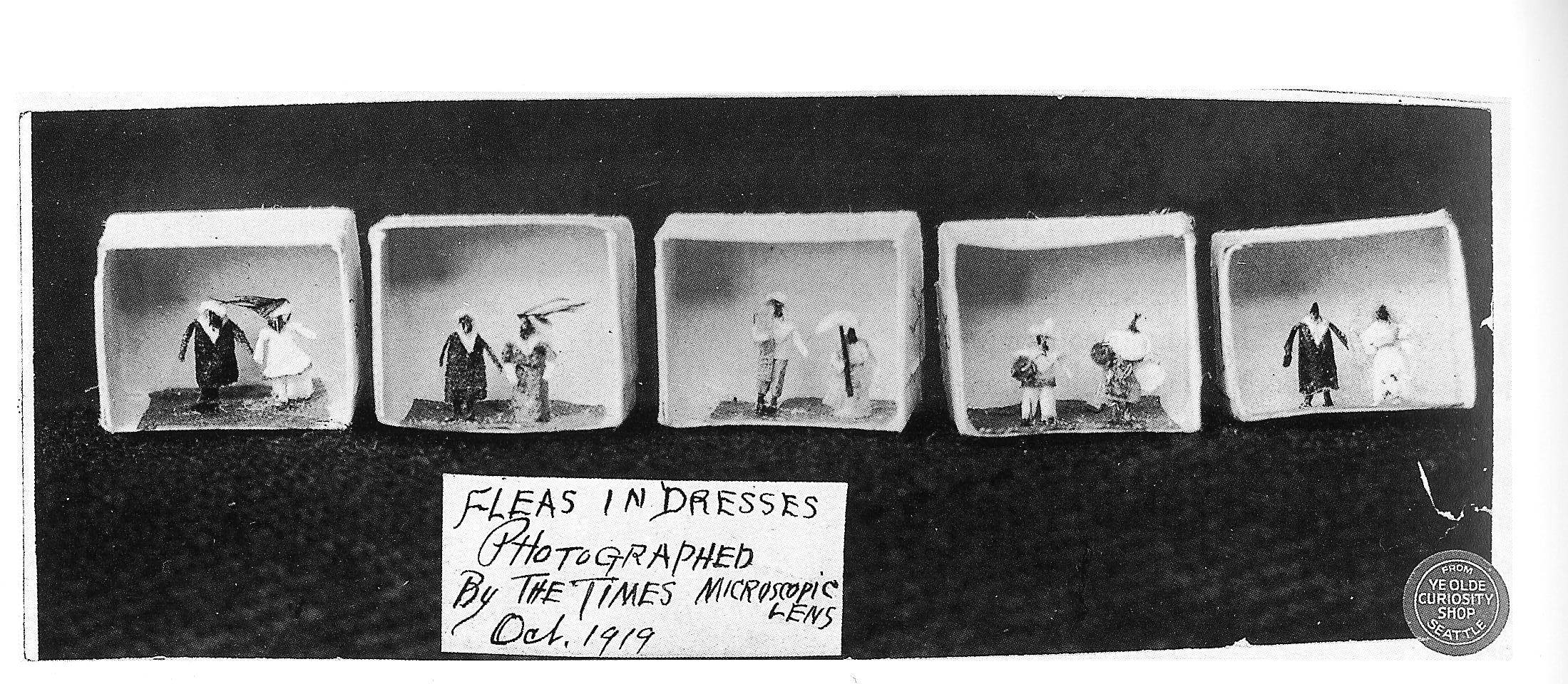 Fleas_in_dresses_at_Ye_Olde_Curiosity_Shop